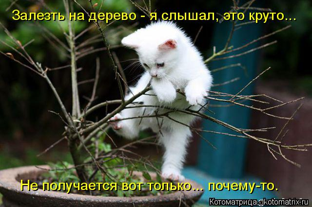 Котоматрица: Залезть на дерево - я слышал, это круто... Не получается вот только... почему-то.