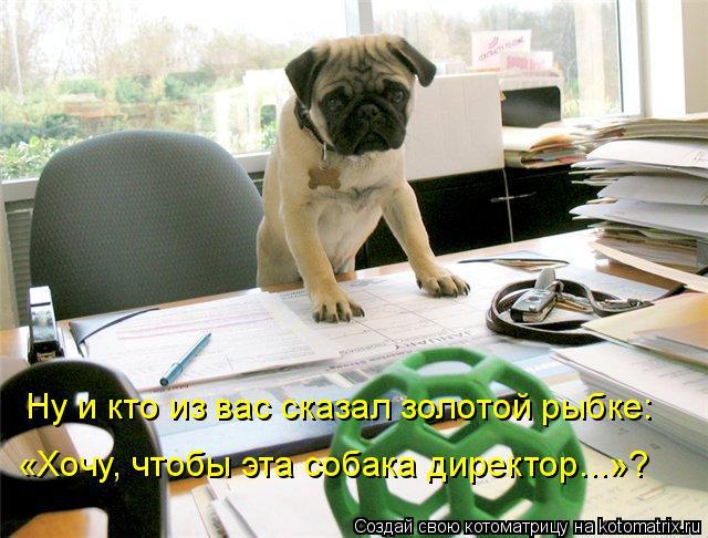 Котоматрица: Ну и кто из вас сказал золотой рыбке:  «Хочу, чтобы эта собака директор...»?