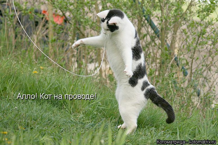 Котоматрица: Алло! Кот на проводе!