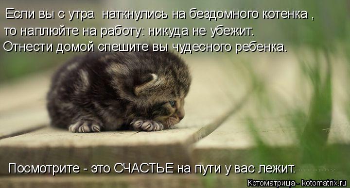 Котоматрица: Если вы с утра  наткнулись на бездомного котенка ,  то наплюйте на работу: никуда не убежит.  Посмотрите - это СЧАСТЬЕ на пути у вас лежит. Отне