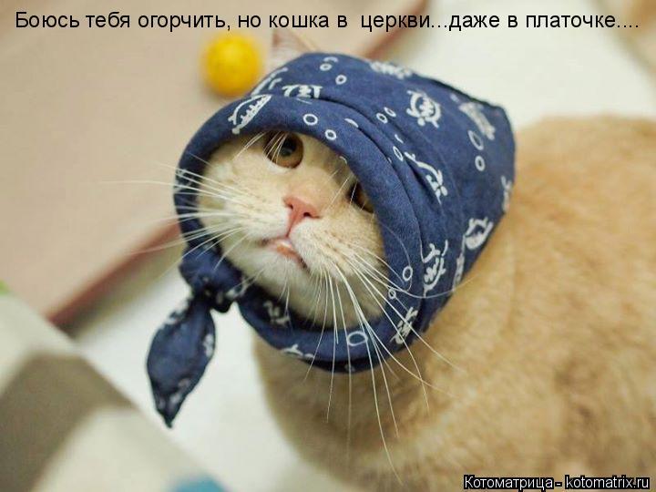 Котоматрица: Боюсь тебя огорчить, но кошка в  церкви...даже в платочке....
