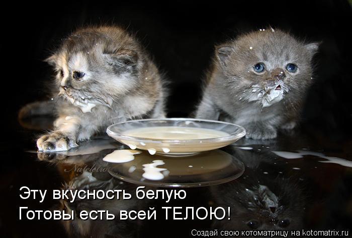 Котоматрица: Эту вкусность белую Готовы есть всей ТЕЛОЮ!