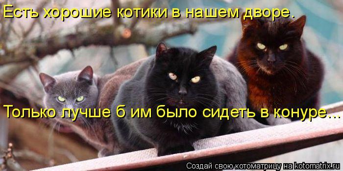 Котоматрица: Есть хорошие котики в нашем дворе.  Только лучше б им было сидеть в конуре...