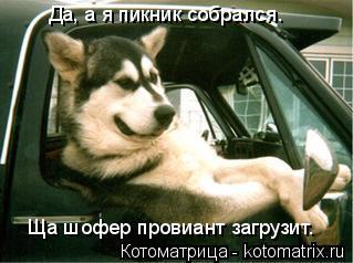 Котоматрица: Да, а я пикник собрался.  Ща шофер провиант загрузит.