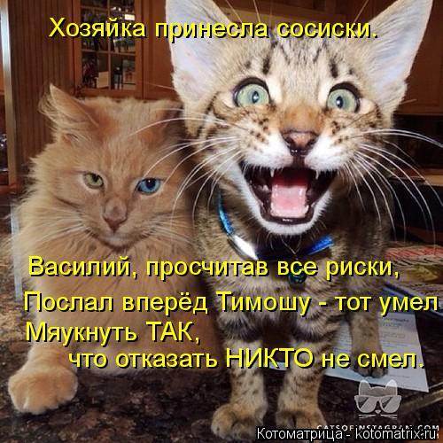 Котоматрица: Хозяйка принесла сосиски. Василий, просчитав все риски, Послал вперёд Тимошу - тот умел Мяукнуть ТАК, что отказать НИКТО не смел.