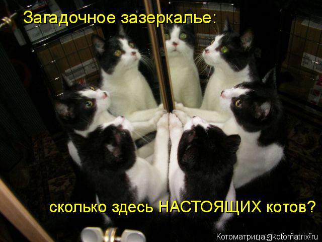 Котоматрица: Загадочное зазеркалье: сколько здесь НАСТОЯЩИХ котов?