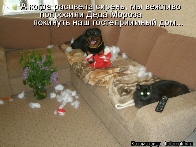 Котоматрица: А когда расцвела сирень, мы вежливо  попросили Деда Мороза   покинуть наш гостеприимный дом...