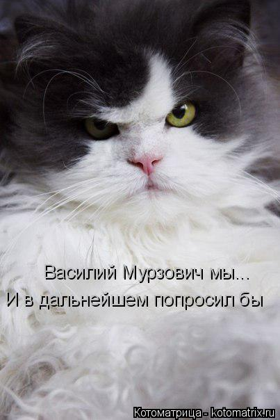 Котоматрица: Василий Мурзович мы... И в дальнейшем попросил бы