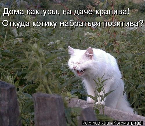 Котоматрица: Дома кактусы, на даче крапива! Откуда котику набраться позитива?