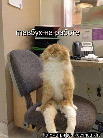 Котоматрица: главбух на работе