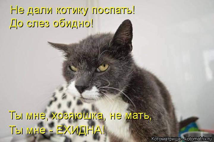 Котоматрица: Не дали котику поспать! До слез обидно! Ты мне, хозяюшка, не мать, Ты мне - ЕХИДНА!
