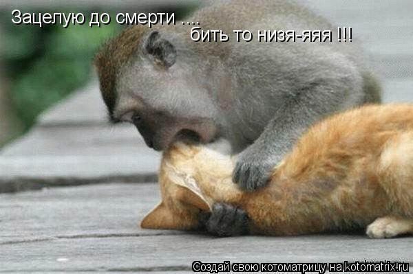 Котоматрица: Зацелую до смерти .... бить то низя-яяя !!!