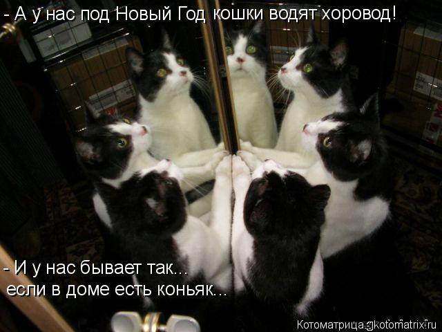 Котоматрица: если в доме есть коньяк... - И у нас бывает так... - А у нас под Новый Год  кошки водят хоровод!