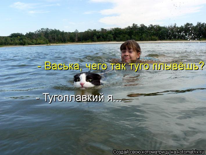 Котоматрица: - Васька, чего так туго плывёшь? - Тугоплавкий я...