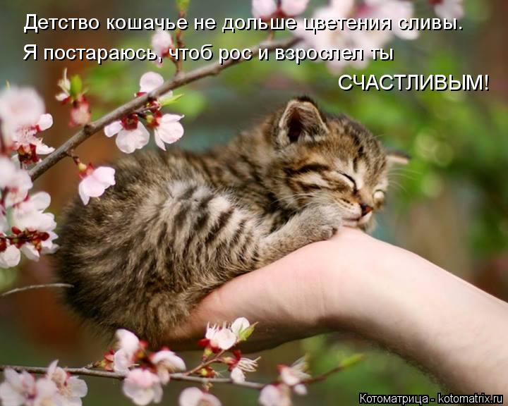 Котоматрица: Детство кошачье не дольше цветения сливы. Я постараюсь, чтоб рос и взрослел ты СЧАСТЛИВЫМ!
