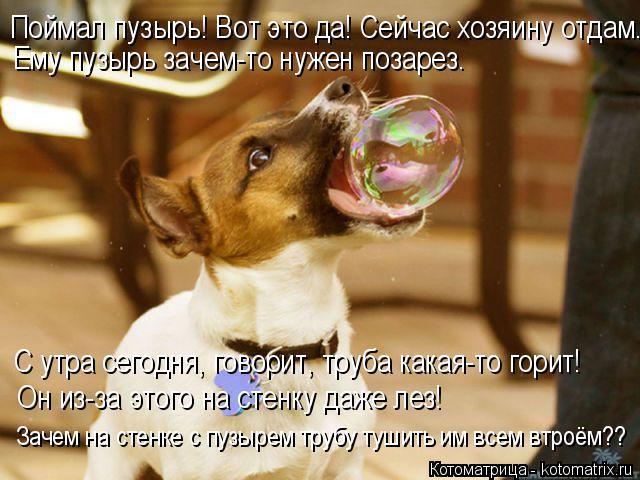 Котоматрица: Поймал пузырь! Вот это да! Сейчас хозяину отдам. Ему пузырь зачем-то нужен позарез. С утра сегодня, говорит, труба какая-то горит! Он из-за это