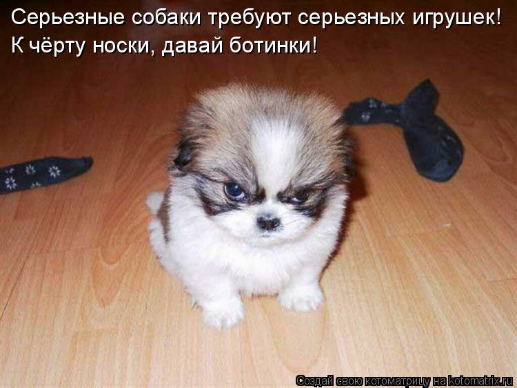 Котоматрица: Серьезные собаки требуют серьезных игрушек! К чёрту носки, давай ботинки!