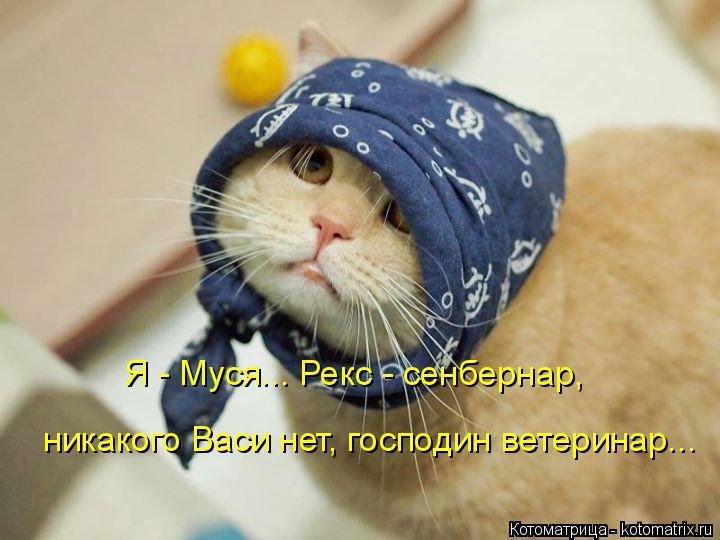 http://kotomatrix.ru/images/lolz/2014/04/23/kotomatritsa_ns.jpg