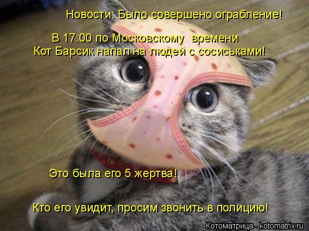 Котоматрица: Новости: Было совершено ограбление! В 17:00 по Московскому  времени Кот Барсик напал на людей с сосиськами! Кто его увидит, просим звонить в по