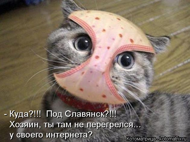Котоматрица: - Куда?!!!  Под Славянск?!!! Хозяин, ты там не перегрелся... у своего интернета?