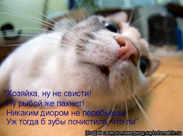"""Котоматрица: """"Хозяйка, ну не свисти! Ну рыбой же пахнет! Никаким диором не перебьешь. Уж тогда б зубы почистила, что ли"""""""