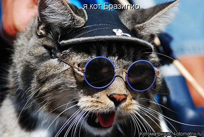 Котоматрица: я кот Бразилио