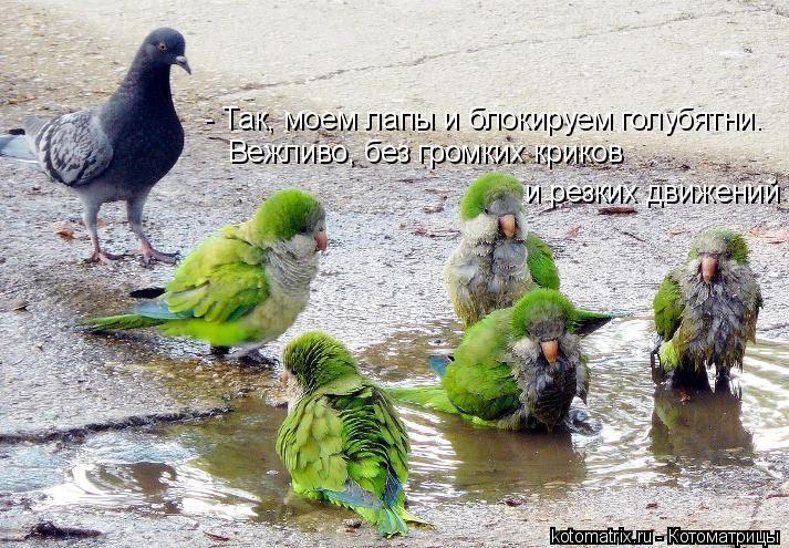 Котоматрица: - Так, моем лапы и блокируем голубятни.  Вежливо, без громких криков  и резких движений