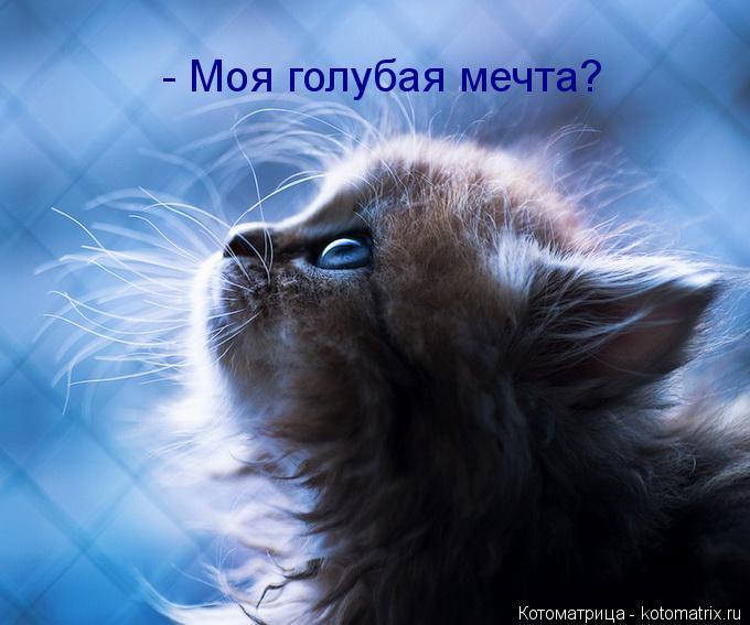Котоматрица: - Моя голубая мечта?