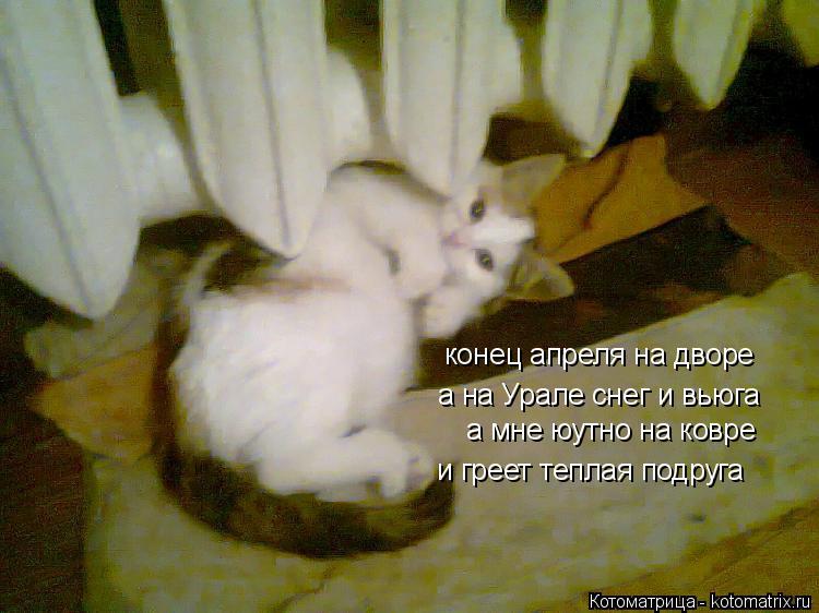 Котоматрица: конец апреля на дворе а на Урале снег и вьюга а мне юутно на ковре и греет теплая подруга