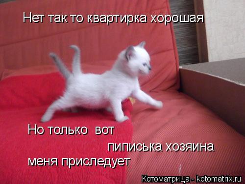 Котоматрица: Нет так то квартирка хорошая Но только  вот  пиписька хозяина меня приследует