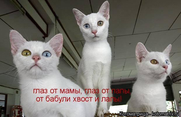 Котоматрица: глаз от мамы, глаз от папы, от бабули хвост и лапы!