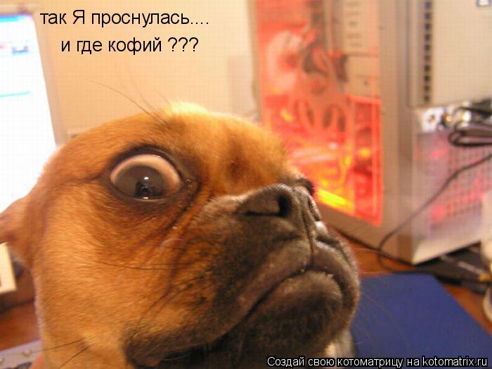 Котоматрица: так Я проснулась.... и где кофий ???