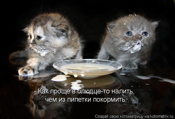 Котоматрица: - Как проще в блюдце-то налить, чем из пипетки покормить.