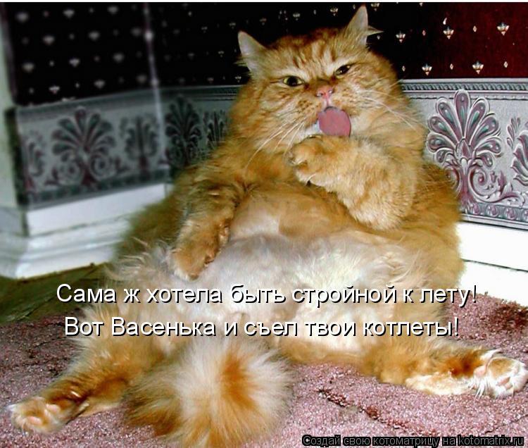 Котоматрица: Сама ж хотела быть стройной к лету! Вот Васенька и съел твои котлеты!