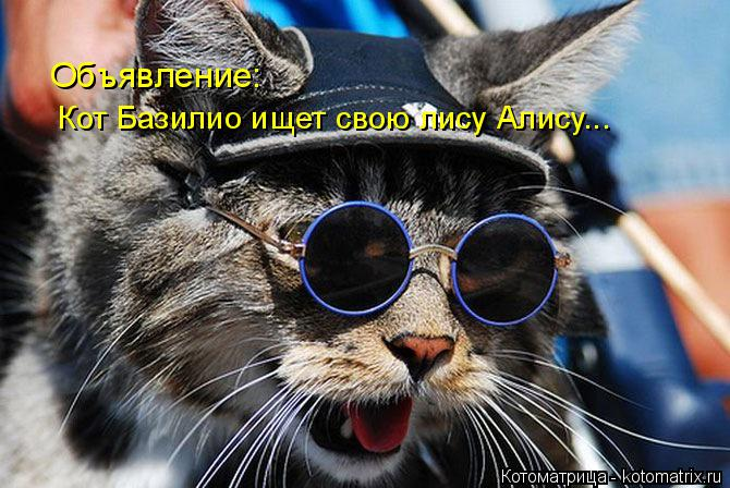 Котоматрица: Кот Базилио ищет свою лису Алису... Объявление: