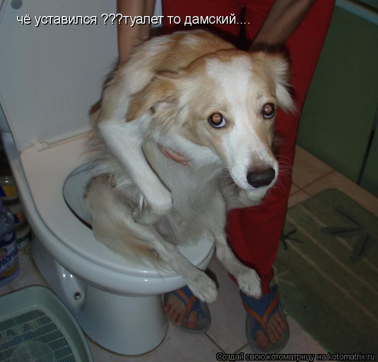 Котоматрица: чё уставился ???туалет то дамский....