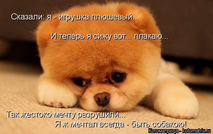Котоматрица: Сказали: я - игрушка плюшевый... И теперь я сижу вот... плакаю... Так жестоко мечту разрушили... Я ж мечтал всегда - быть собакою!