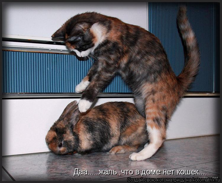 Котоматрица: Даа.....жаль ,что в доме нет кошек....