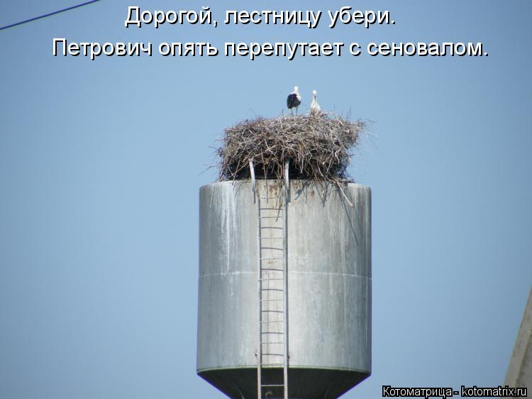 Котоматрица: Дорогой, лестницу убери. Петрович опять перепутает с сеновалом.