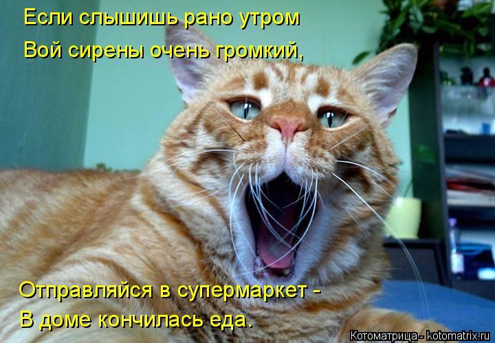 Котоматрица: Если слышишь рано утром Вой сирены очень громкий, Отправляйся в супермаркет - В доме кончилась еда.
