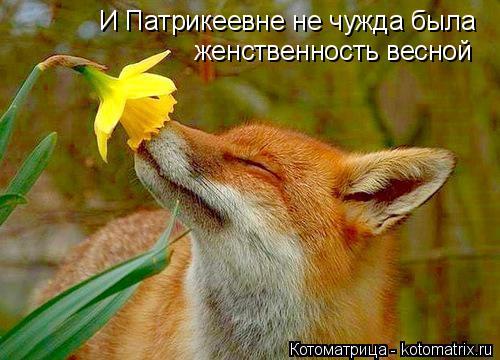 Котоматрица: И Патрикеевне не чужда была женственность весной