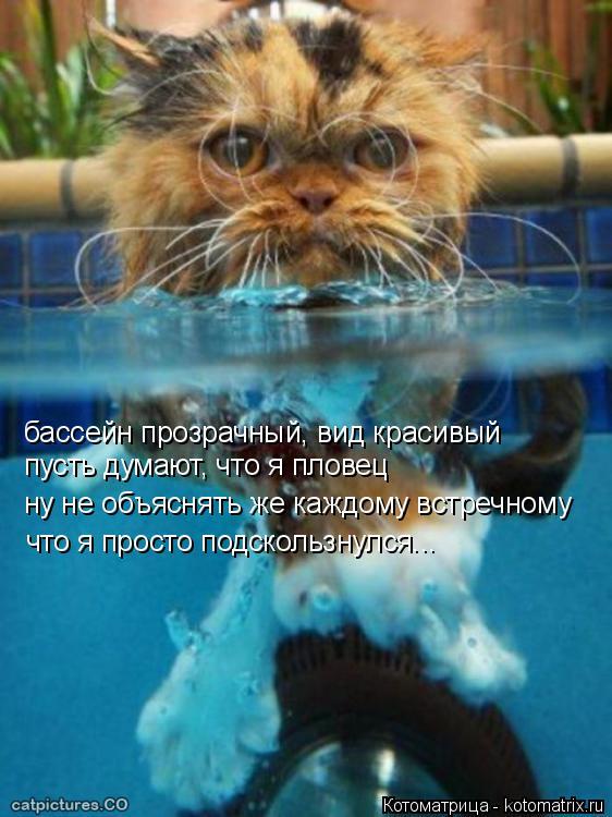 Котоматрица: бассейн прозрачный, вид красивый пусть думают, что я пловец ну не объяснять же каждому встречному что я просто подскользнулся...