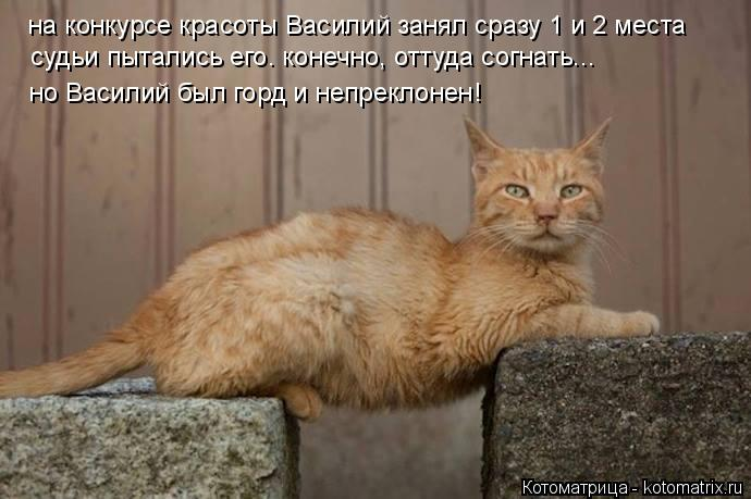 Котоматрица: на конкурсе красоты Василий занял сразу 1 и 2 места судьи пытались его. конечно, оттуда согнать... но Василий был горд и непреклонен!