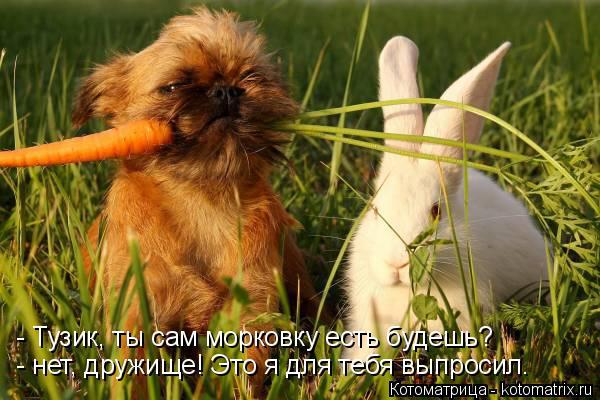 Котоматрица: - Тузик, ты сам морковку есть будешь? - нет, дружище! Это я для тебя выпросил.