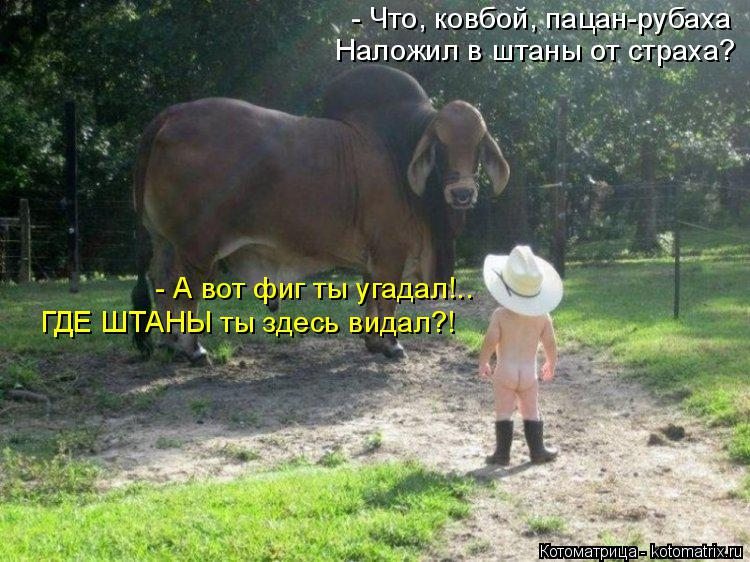 Котоматрица: - Что, ковбой, пацан-рубаха Наложил в штаны от страха? - А вот фиг ты угадал!.. ГДЕ ШТАНЫ ты здесь видал?!