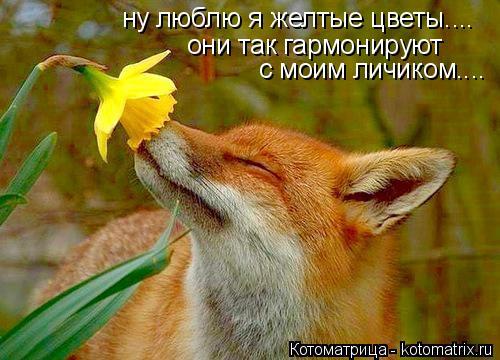 Котоматрица: ну люблю я желтые цветы.... они так гармонируют  с моим личиком....