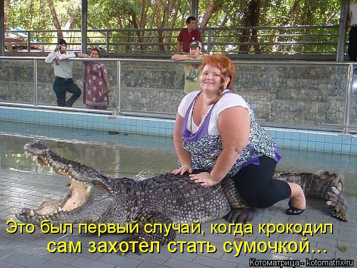 Котоматрица: Это был первый случай, когда крокодил сам захотел стать сумочкой...