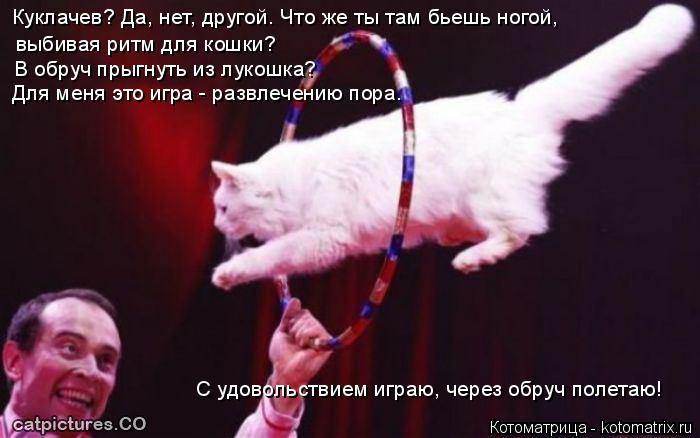 Котоматрица: Куклачев? Да, нет, другой. Что же ты там бьешь ногой,  выбивая ритм для кошки? В обруч прыгнуть из лукошка? Для меня это игра - развлечению пора.