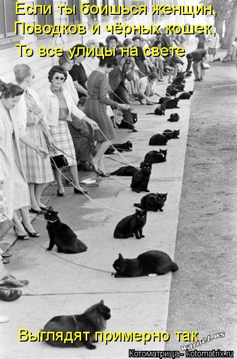 Котоматрица: Если ты боишься женщин, Поводков и чёрных кошек, То все улицы на свете Выглядят примерно так.