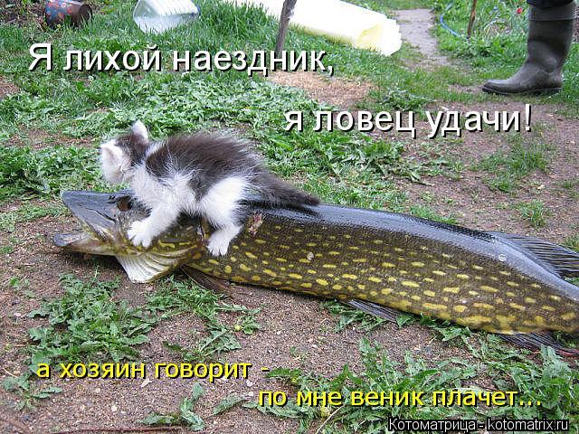 Котоматрица: Я лихой наездник, я ловец удачи! по мне веник плачет... а хозяин говорит -